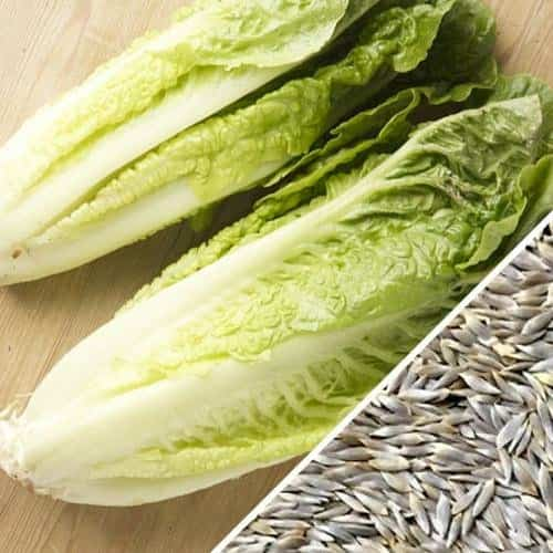 Buy Organic Lettuce Seeds From Seeds Now