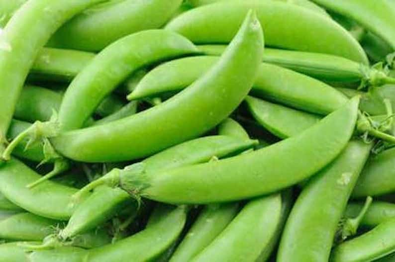 Buy Local Organic Pea Seeds
